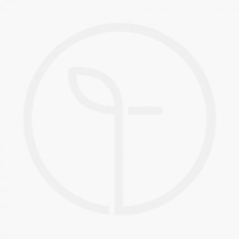 Classic Lemonade (Seasonal)